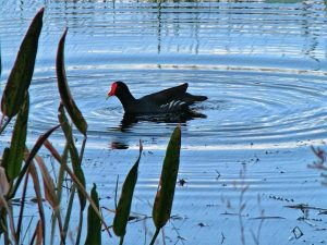 7 Tips for Retention Pond Maintenance